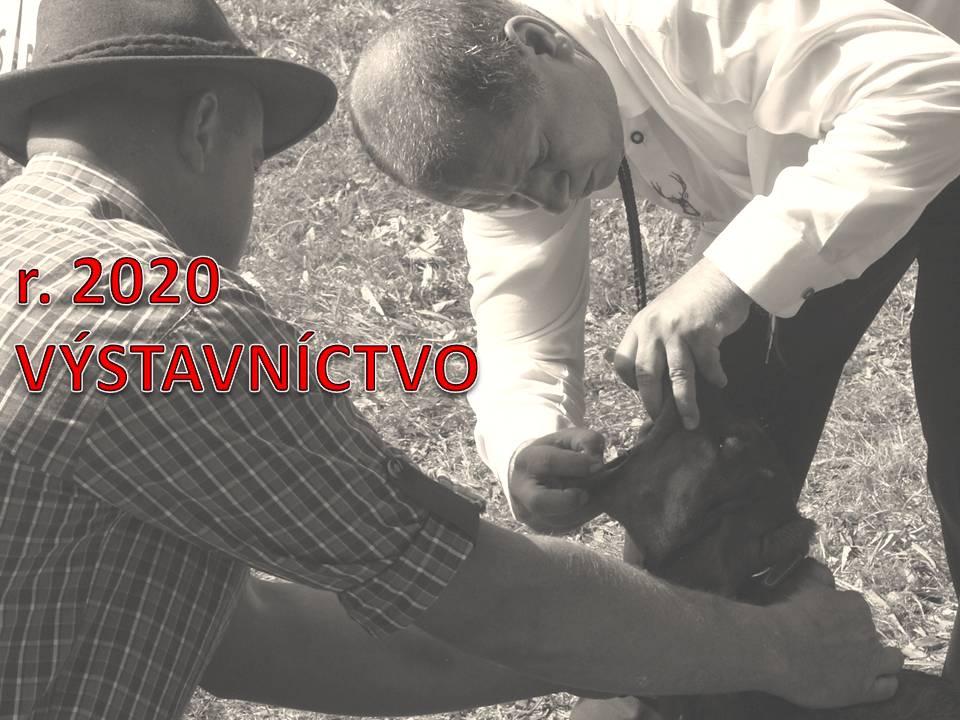 Read more about the article Výstavníctvo 2020